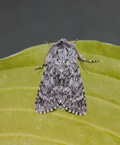 Wild Places blog moths outer hebrides