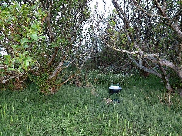 Robinson Midi 15W Actinic trap