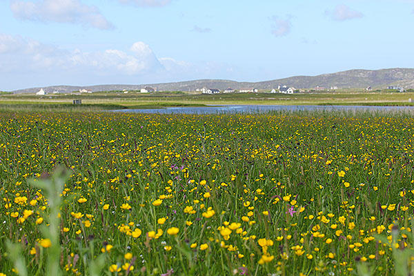 machair, south uist