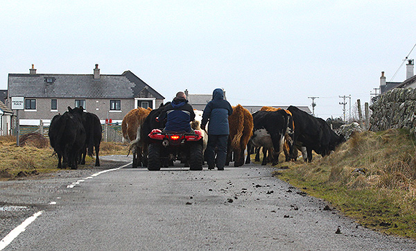 Traffic jam, West Gerinish