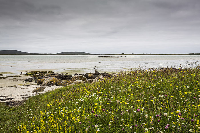 North Uist, machair looking beautiful!