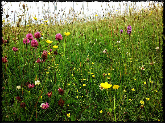 Nearby meadow